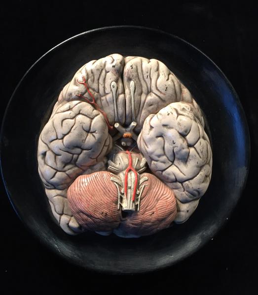 Two Rare Human Brain Anatomical Models Signed Bock Steger Art 29