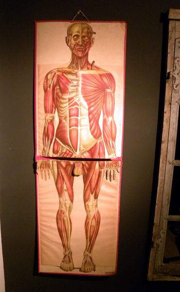 Life Size Pop Up Human Wall Chart Anatomical Mannequin Art 47
